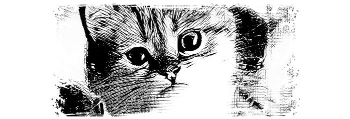 02 Koty Kubek z Kotami Pracownia Fotograficzna Królewska 7 Wzór
