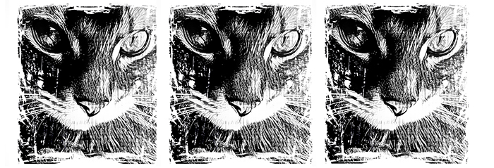 03 Koty Kubek z Kotami Pracownia Fotograficzna Królewska 7 Wzór