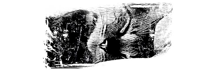 06 Koty Kubek z Kotami Pracownia Fotograficzna Królewska 7 Wzór