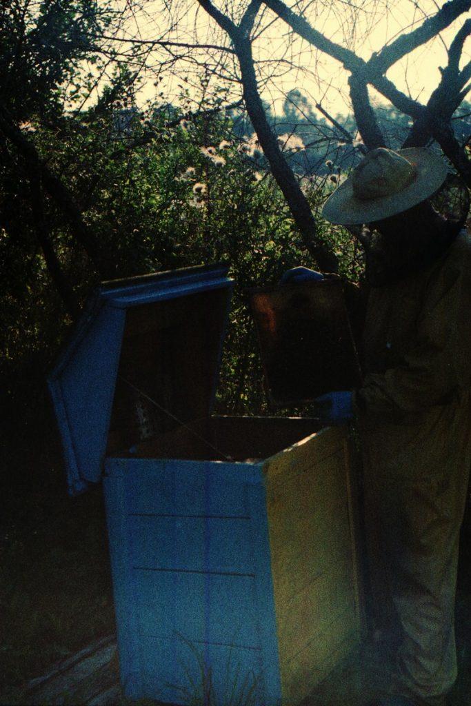 Pszczoły Pszczoła Pasieka Micuda (1)