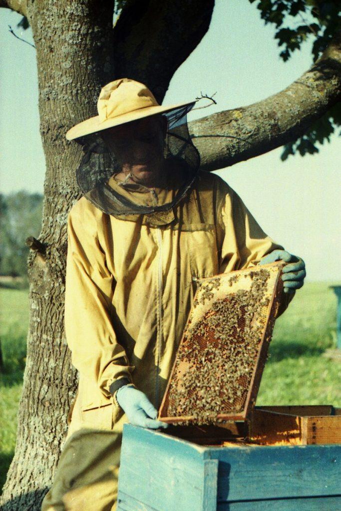 Pszczoły Pszczoła Pasieka Micuda (10)