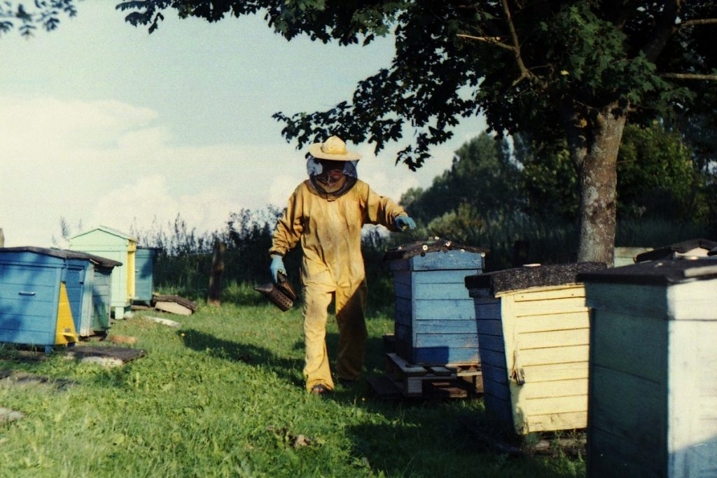 Pszczoły Pszczoła Pasieka Micuda (13)