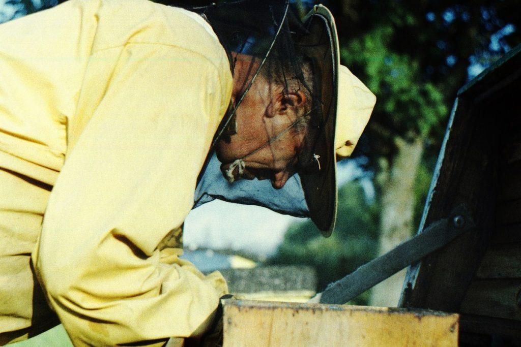 Pszczoły Pszczoła Pasieka Micuda (14)