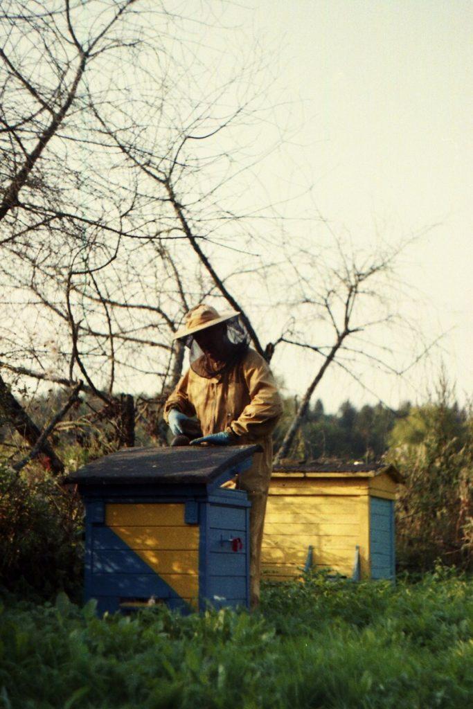 Pszczoły Pszczoła Pasieka Micuda (16)