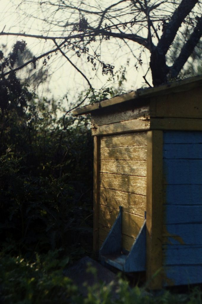Pszczoły Pszczoła Pasieka Micuda (17)