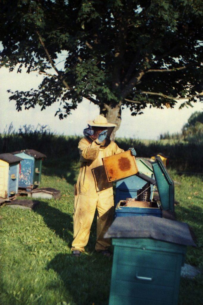 Pszczoły Pszczoła Pasieka Micuda (2)