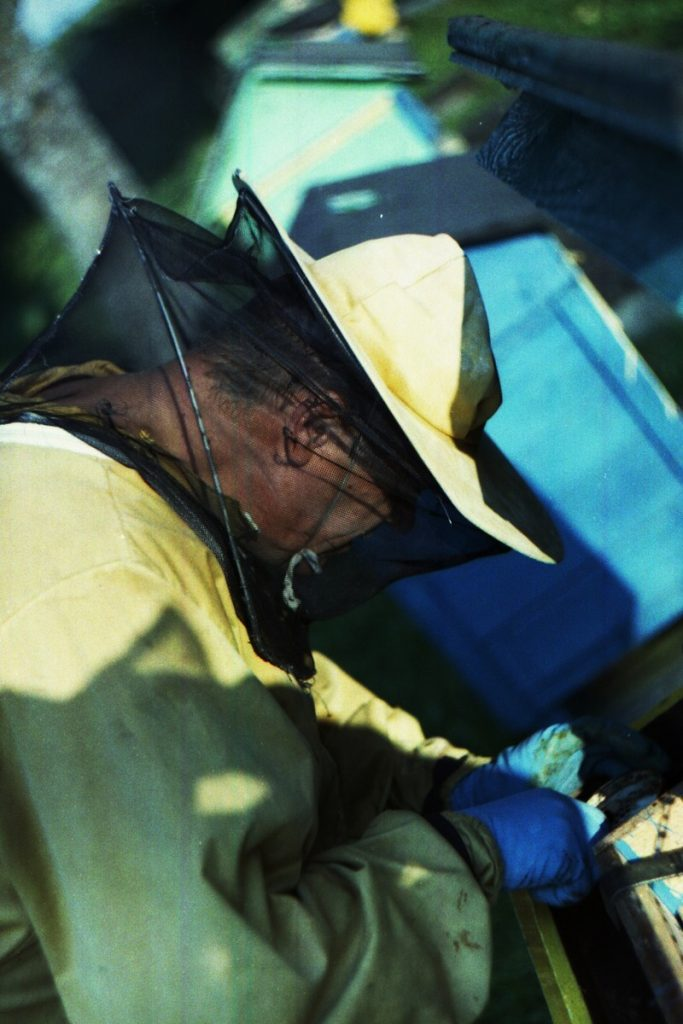 Pszczoły Pszczoła Pasieka Micuda (4)