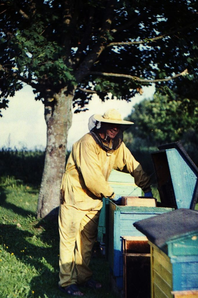 Pszczoły Pszczoła Pasieka Micuda (5)