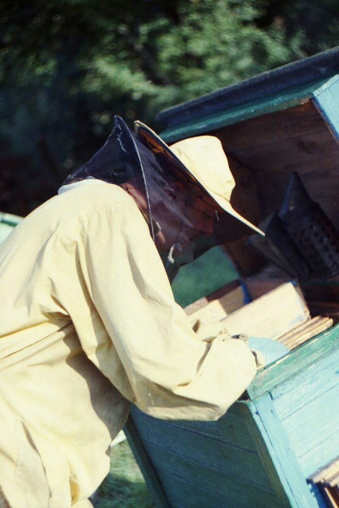 Pszczoły Pszczoła Pasieka Micuda (7)