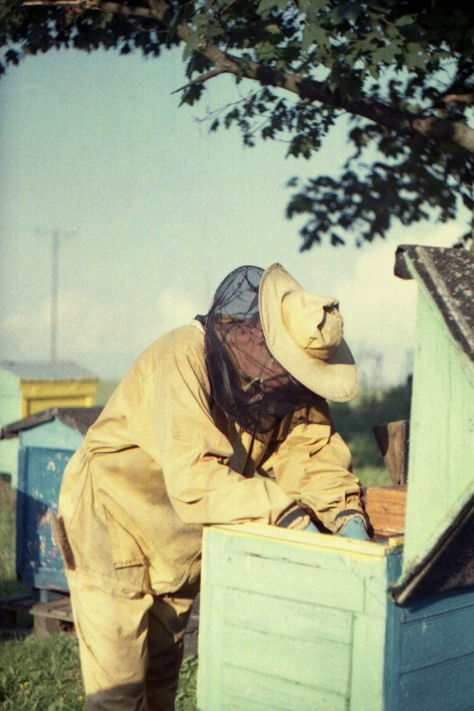 Pszczoły Pszczoła Pasieka Micuda (8)
