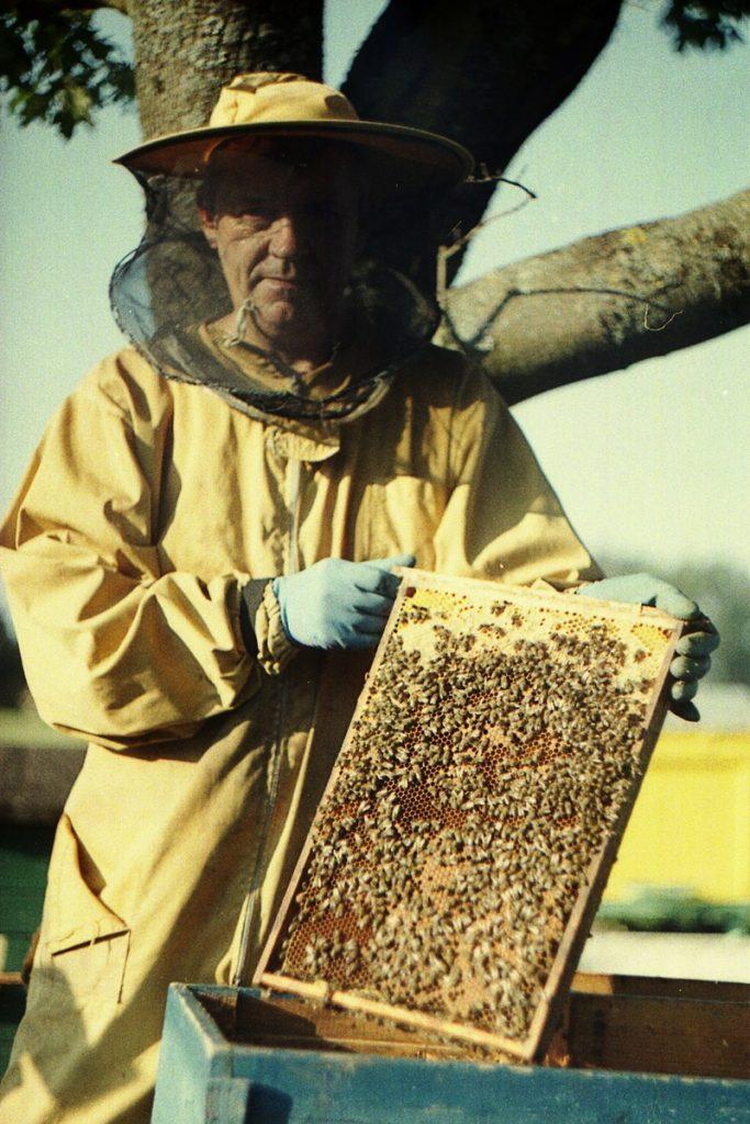 Pszczoły Pszczoła Pasieka Micuda (9)